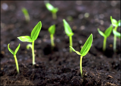 Little-sprouts.-Grow-bean-sprouts-in-your-back-garden